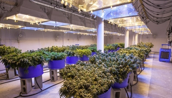 The Guide to Industrial Hemp Processing Equipment in 2020
