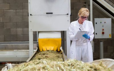 What is the Best Equipment to Process Hemp?