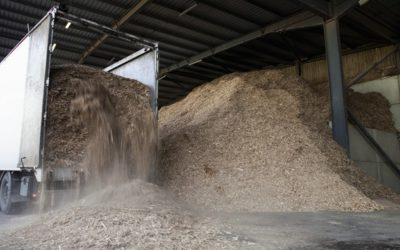 Biomass Energy Processing and Production